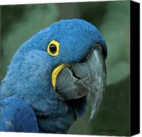 Tropical Bird Art Canvas Prints - Blue Macaw 2 Canvas Print by Larry Linton