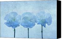 Carnation Canvas Prints - Blue on Blue Canvas Print by Rebecca Cozart