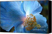 Colors Special Promotions - Blue Poppy Canvas Print by Carol Groenen
