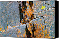 Maine Canvas Prints - Blue Rocks and Lichen Canvas Print by Peter J Sucy