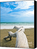 Nawarat Namphon Canvas Prints - Blue sea and sky with log on the beach Canvas Print by Nawarat Namphon