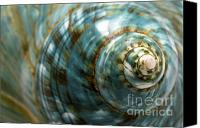 Spiral Canvas Prints - Blue Seashell Canvas Print by Fabrizio Troiani