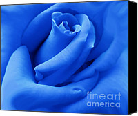 Blue Flowers Canvas Prints - Blue Velvet Rose Flower Canvas Print by Jennie Marie Schell