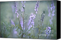 Swamp Canvas Prints - Blue Vervain Canvas Print by Priska Wettstein