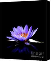 Blue Flowers Canvas Prints - Blue Water Lily . 7D5714 Canvas Print by Wingsdomain Art and Photography