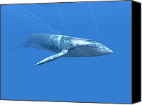 Whale Canvas Prints - Blue Whale Canvas Print by Christian Darkin