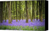 Forest Canvas Prints - Bluebell carpet Canvas Print by Jane Rix
