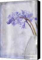 Layered Canvas Prints - Bluebells II Canvas Print by Marion Galt