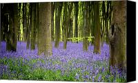 Woodland Canvas Prints - Bluebells Canvas Print by Jane Rix