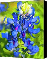 Blue Flowers Canvas Prints - Bluebonnet Fantasy Canvas Print by Stephen Anderson
