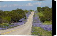 Bluebonnets Canvas Prints - Bluebonnet Highway Canvas Print by Andrew McInnes