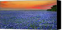 Blue Photo Canvas Prints - Bluebonnet Sunset Vista - Texas landscape Canvas Print by Jon Holiday