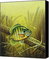 Log Canvas Prints - Bluegill and Jig Canvas Print by JQ Licensing