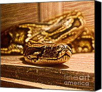 Reptiles Mixed Media Canvas Prints - Boa Constrictor I  Canvas Print by Ms Judi