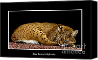 Father Christmas Canvas Prints - Bobcat Canvas Print by Rose Santuci-Sofranko