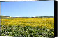 Horror Movies Canvas Prints - Bodega Bay . Yellow Field . 7D12403 Canvas Print by Wingsdomain Art and Photography