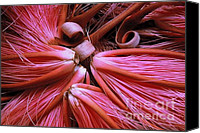Ranjini Kandasamy Canvas Prints - Bombax Flowers Canvas Print by Ranjini Kandasamy