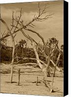 Lowcountry Canvas Prints - Boneyard in sepia Canvas Print by Suzanne Gaff