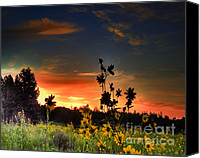 Arne J Hansen Canvas Prints - Bonita Meadow Canvas Print by Arne Hansen