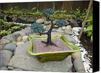 Tree Sculpture Canvas Prints - Bonsai Tree Green Medium Canvas Print by Scott Faucett