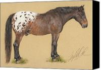 Equestrian Pastels Canvas Prints - Boo Boo the Appaloosa Canvas Print by Terry Kirkland Cook