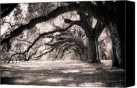 Shadows Canvas Prints - Boone Hall Plantation Live Oaks Canvas Print by Dustin K Ryan
