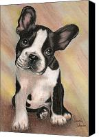 Bull Pastels Canvas Prints - Boston Bull Dog Canvas Print by Dorothy  Oakman