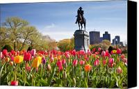 Blossom Canvas Prints - Boston Public Garden Tulips Canvas Print by Susan Cole Kelly