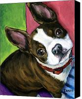 Dog Art Canvas Prints - Boston Terrier Looking Up Canvas Print by Dottie Dracos