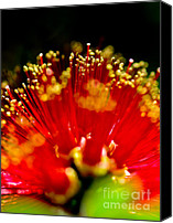 Bottle Brush Photo Canvas Prints - Bottle Brush Canvas Print by Mitch Shindelbower