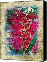 Judi Bagwell Canvas Prints - Bottlebrush Canvas Print by Judi Bagwell