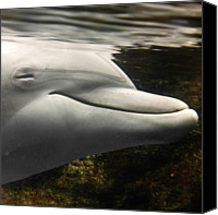 Dolphin Canvas Prints - Bottlenose Canvas Print by Luigi Masella