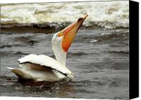 White Pelican Canvas Prints - Bottoms Up Canvas Print by Thomas Young