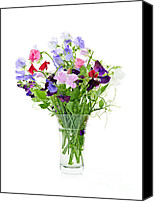 Springtime Photo Canvas Prints - Bouquet of sweet pea flowers Canvas Print by Elena Elisseeva