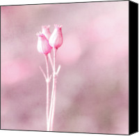 Provence Canvas Prints - Bouquet Of Three Dried Flowers In Pink Bokeh Canvas Print by Alexandre Fundone
