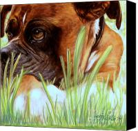 Boxer Pastels Canvas Prints - Boxer  Canvas Print by Patricia L Davidson 