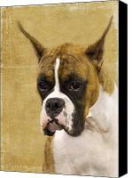 Boxer Dog Canvas Prints - Boxer Canvas Print by Rebecca Cozart