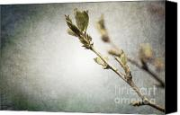 Pink Flower Branch Canvas Prints - Branch Blue Canvas Print by Andrea Hazel Ihlefeld