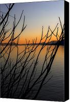 Lago Canvas Prints - Branches In The Sunset Canvas Print by Joana Kruse