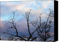 Debbie Canvas Prints - Branching Out Canvas Print by Deborah  Crew-Johnson