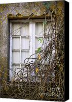 Peeling Canvas Prints - Branchy Window Canvas Print by Carlos Caetano