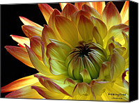 Fine Arts Photography Canvas Prints - Breaking Free Canvas Print by Louie Rochon
