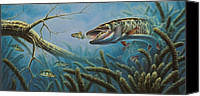 Freshwater Canvas Prints - Breakline Hunter Musky Canvas Print by JQ Licensing
