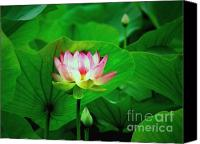 Lotus Leaves Canvas Prints - Breakthrough Canvas Print by Marion Cullen
