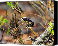 Insect Photography Canvas Prints - Breeding Bees Canvas Print by Al Powell Photography USA
