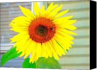 Amy Bradley Canvas Prints - Bright Happy Sunflower face Canvas Print by Amy Bradley