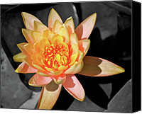 Macro Canvas Prints - Bright Lily iSplash Canvas Print by Kimberly Gonzales