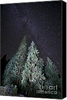 Evergreens Canvas Prints - Bright Night Canvas Print by Jeff Kolker