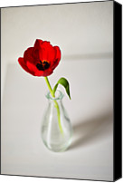 Rotterdam Canvas Prints - Bright Red Tulip In Small Vase Canvas Print by Photo by Ira Heuvelman-Dobrolyubova