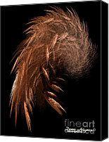 Dana Haynes Canvas Prints - Broken Wing Canvas Print by Dana Haynes